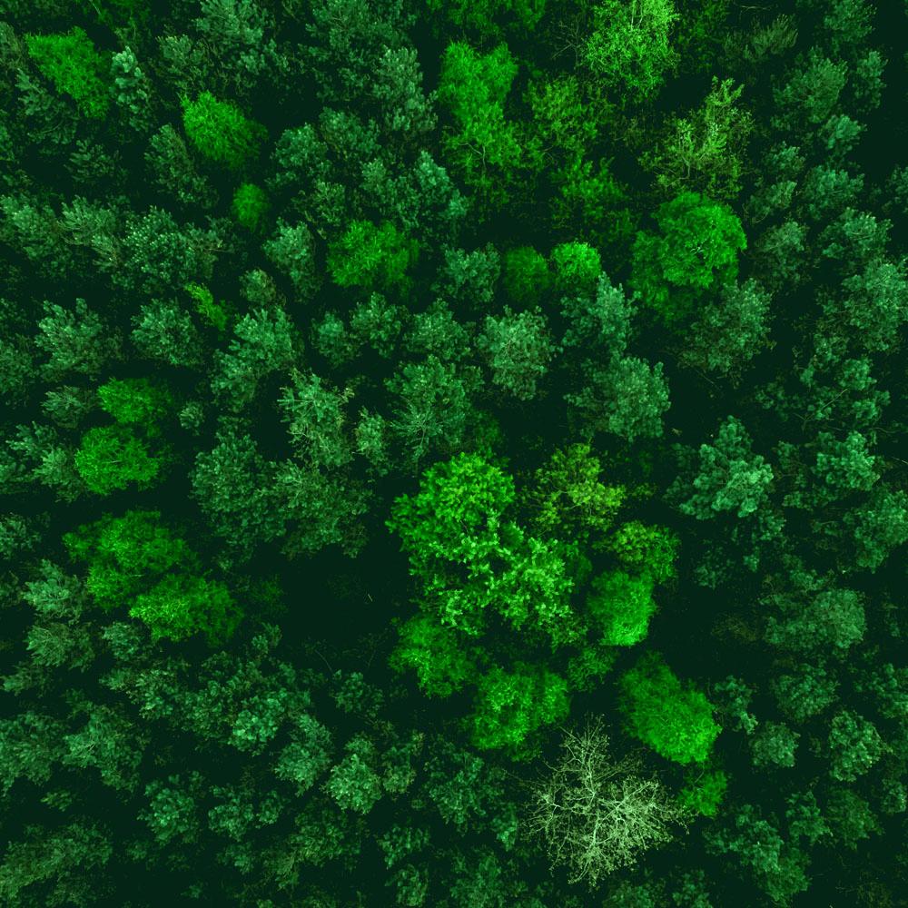 Cover de la serie Eléments Terre : Forêt disponible sur Sybel