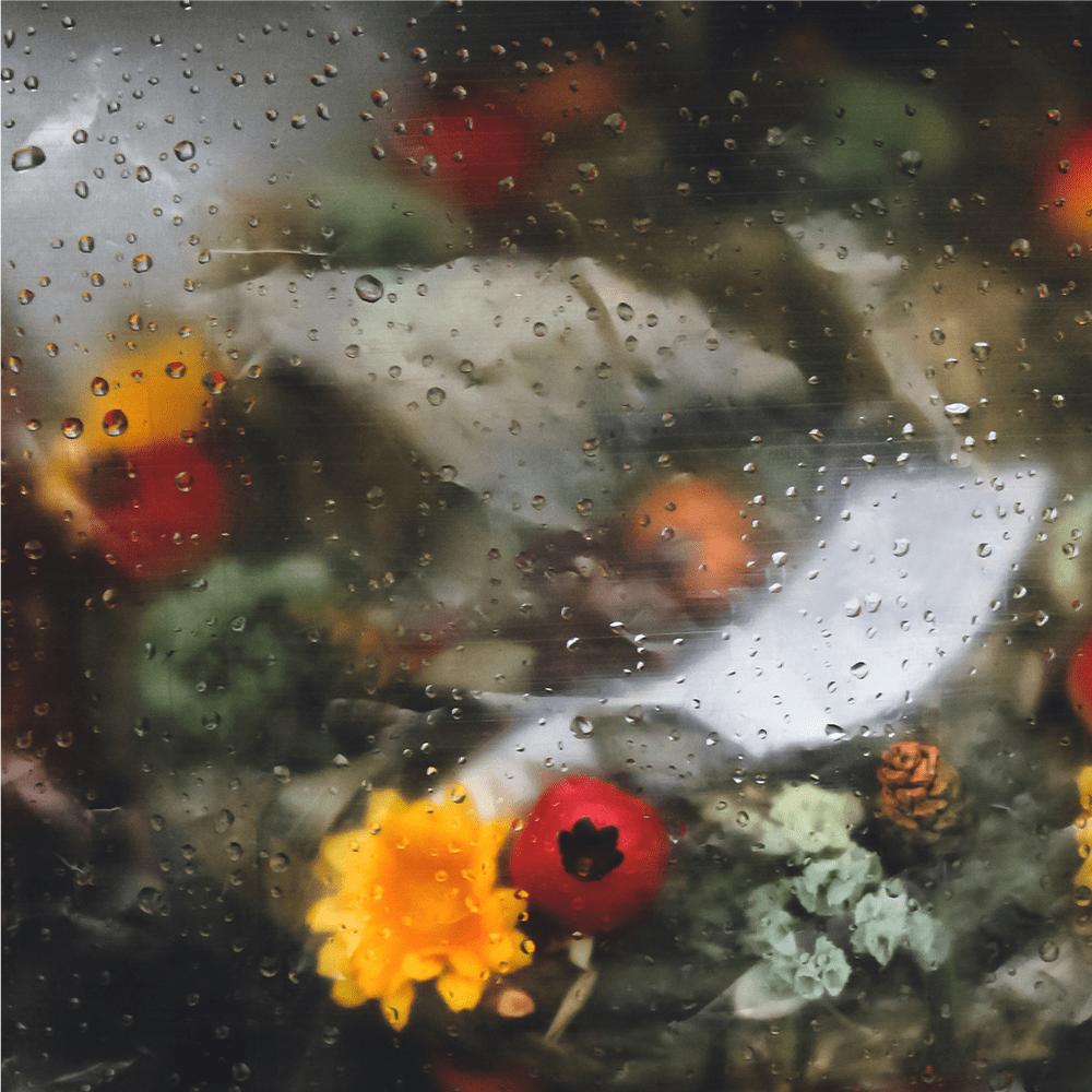 Cover de la serie Une serre sous la pluie disponible sur Sybel
